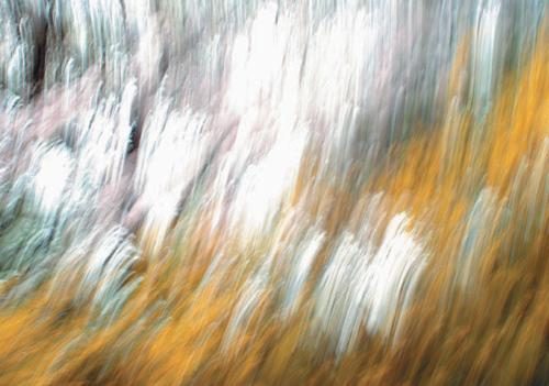 [그림이 있는 아침] 폭포수처럼 봄이 흘러내리고… 기사의 사진