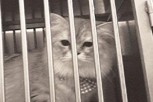 """""""쓰레기통에 버려진 칼로 수술""""… 불만제로 동물병원 충격적인 진료 실태 고발 기사의 사진"""