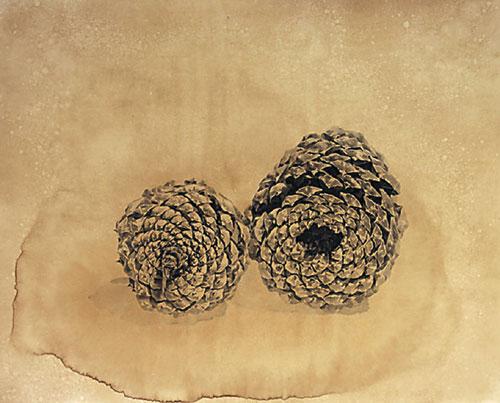 [그림이 있는 아침] 솔방울 기사의 사진