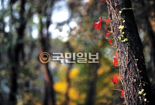 [묵상이 있는 풍경] 겸손이 무르익는 가을 기사의 사진