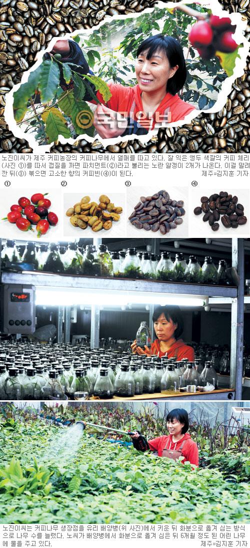 북위 33도 제주도의 커피 실험… 우리나라 첫 커피 농사꾼 노진이 기사의 사진