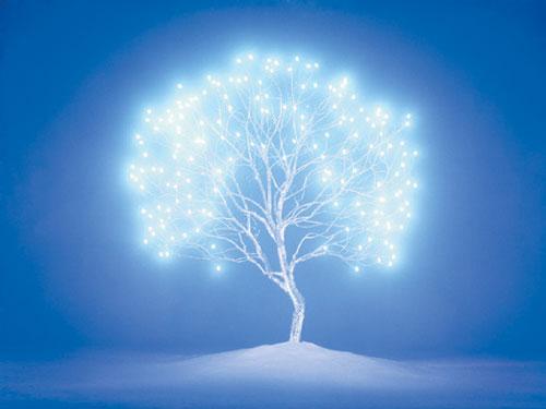 [그림이 있는 아침] 생명나무 기사의 사진