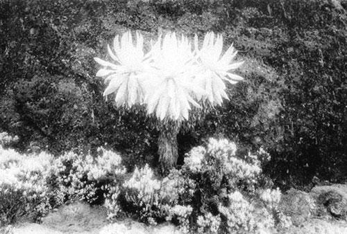 [그림이 있는 아침] 달의 꽃 기사의 사진
