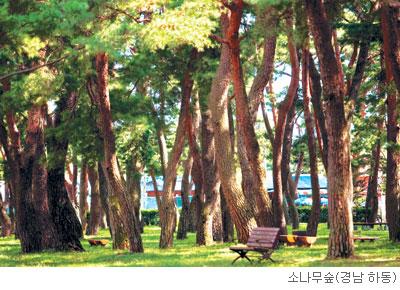 [고규홍의 식물 이야기] 진정한 소나무 사랑법 기사의 사진