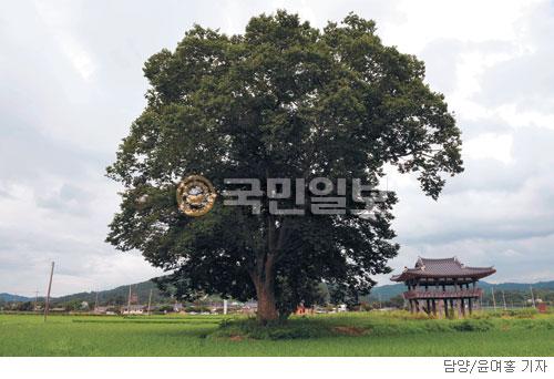 [계절의 발견] 정자나무 그늘 아래 기사의 사진