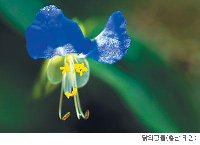 [고규홍의 식물 이야기] 하루를 살아도 본분 잊지 않는 꽃 기사의 사진