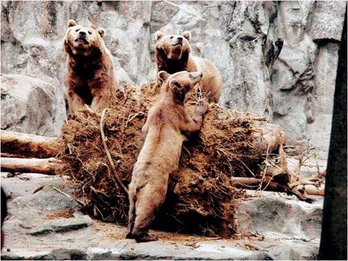 [배진선의 동물 이야기] 불곰의 겨울잠은 길다 기사의 사진
