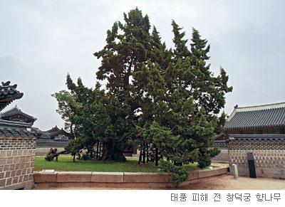 [고규홍의 식물 이야기] 새를 이용해 번식하는 향나무 기사의 사진