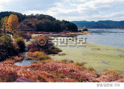 [계절의 발견] 가을 우포늪은 絶唱이다 기사의 사진