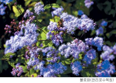 [고규홍의 식물 이야기] 고향 떠나 사랑받은 불로화 기사의 사진