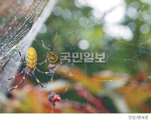 [계절의 발견] 새벽 이슬 머금은 거미줄 기사의 사진