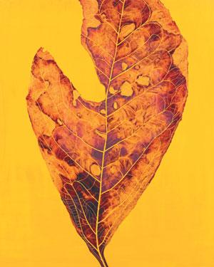 [그림이 있는 아침] 가을 잎 기사의 사진