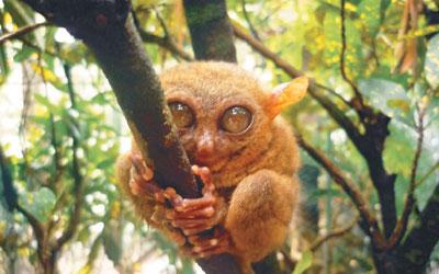 [배진선의 동물이야기] 왕눈을 가진 안경원숭이 기사의 사진