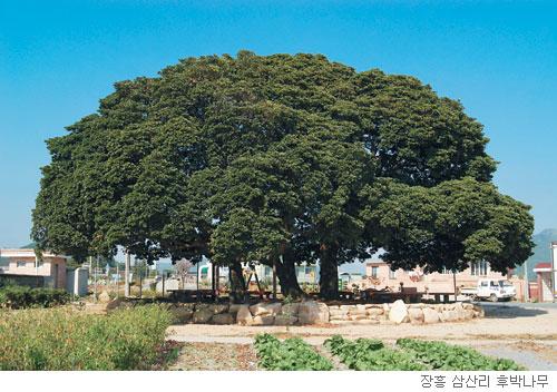 [고규홍의 식물 이야기] 공존의 지혜를 가진 나무 기사의 사진