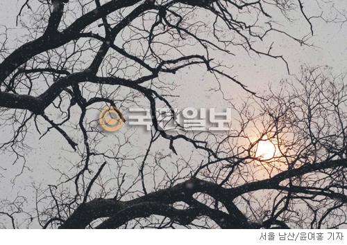 [계절의 발견] 북풍에 단호한 나목 기사의 사진