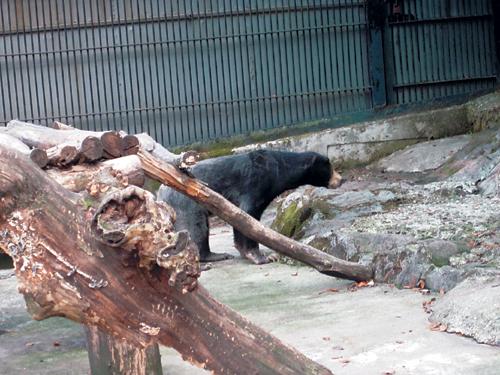 [배진선의 동물 이야기] 말레이곰 탈출에서 귀환까지 기사의 사진