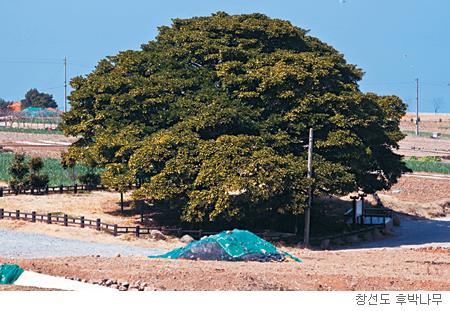 [고규홍의 식물이야기] 남해를 지키는 이순신 나무 기사의 사진