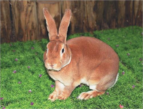 [배진선의 동물이야기] 제똥을 먹는 토끼 기사의 사진