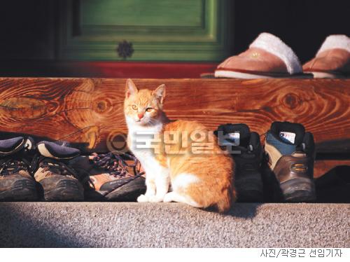 [고궁의 사계] 고양이와 봄 기사의 사진