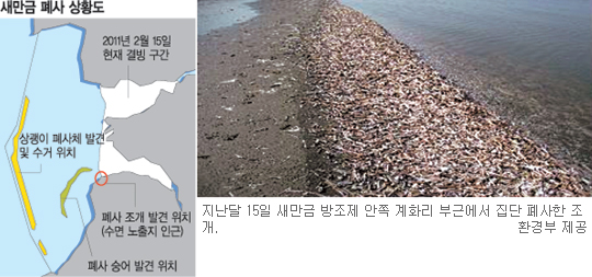 상괭이 230마리 떼죽음 '집단 질식' 미스터리 기사의 사진