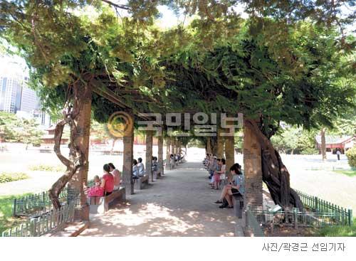 [고궁의 사계] 등나무 그늘 아래 기사의 사진