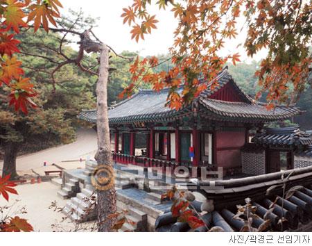 [고궁의 사계] 秋色의 춘당대 기사의 사진