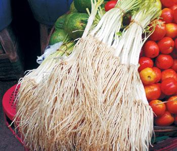유황성분 마늘의 6배 '삼채' 인기 누린다 기사의 사진