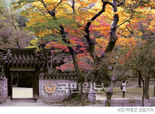 [고궁의 사계] 가을 나무는 비장하다 기사의 사진