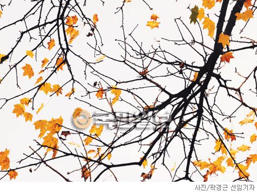 [고궁의 사계] 음나무 가시 삼엄하구나 기사의 사진