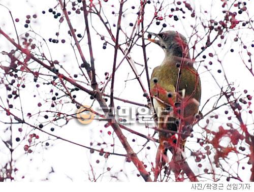 [고궁의 사계] 겨울새의 식도락 기사의 사진