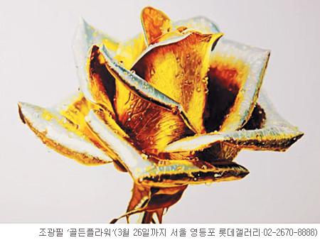 [그림이 있는 아침] 황금기 기사의 사진