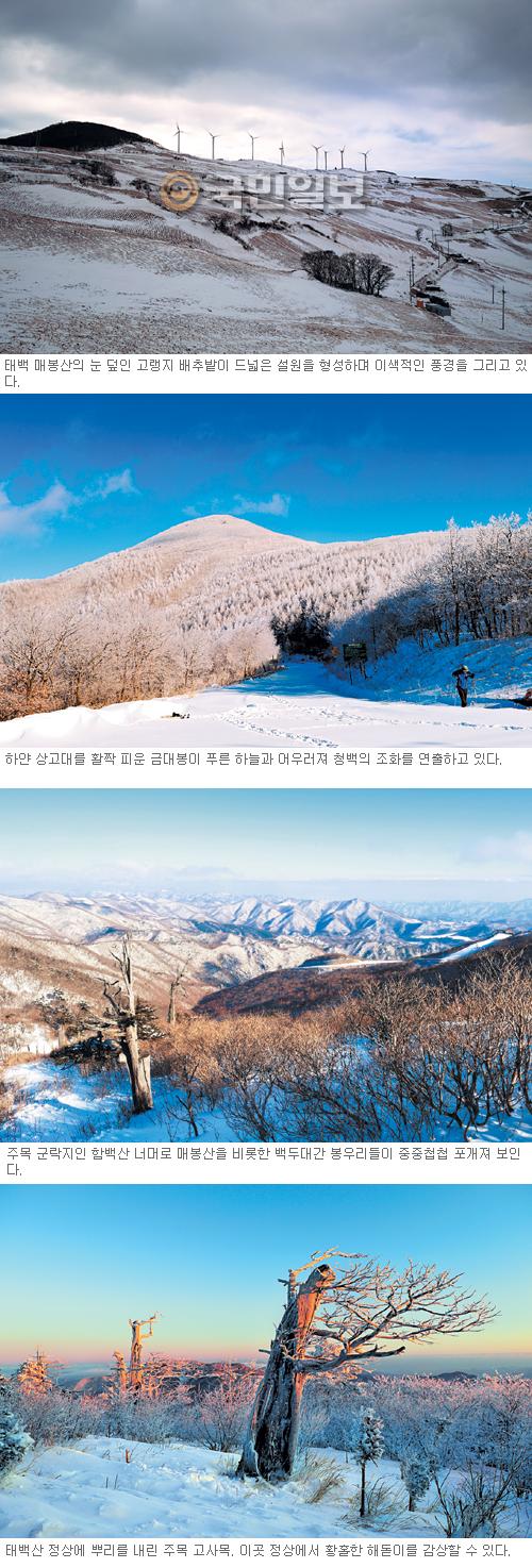 설산의 유혹… 춥고 눈내리면 태백으로 떠나야 하는 이유들 기사의 사진
