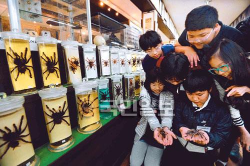 [포토 카페] 세계 유일의 거미박물관 기사의 사진