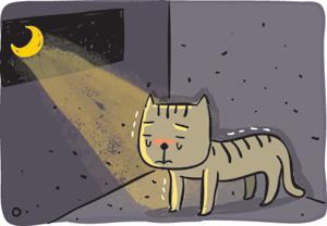 [기획] 버려진 개·고양이 구조해 입양보냈더니 학대… 동물애호가 울리는 악덕 업자들 기사의 사진