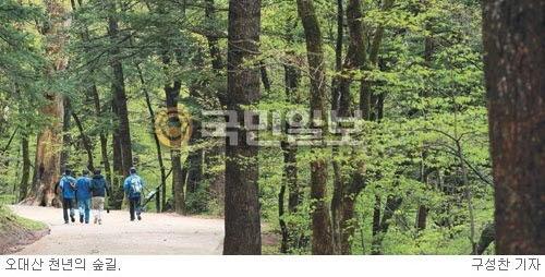 [그 숲길 다시 가보니-임항] 오대산 옛길에 마음의 평화가 기사의 사진