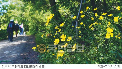 [그 숲길 다시 가보니-임항] 식물들이 춤추는 곰배령길 기사의 사진