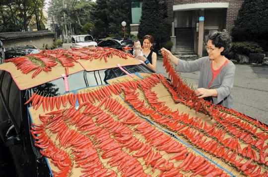 [포토 카페] 가을고추 말리기 기사의 사진