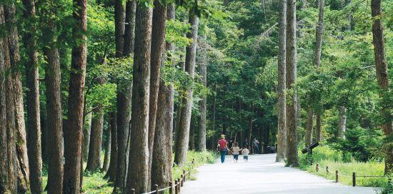 [그 숲길 다시 가보니-임항] 전나무숲은 태풍을 이겨내고 기사의 사진