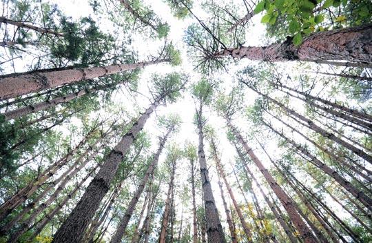 [그 숲길 다시 가보니-임항] 왕피천, 생태관광 명소로 거듭나다 기사의 사진