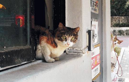 [포토 카페] 길고양이의 호기심 기사의 사진