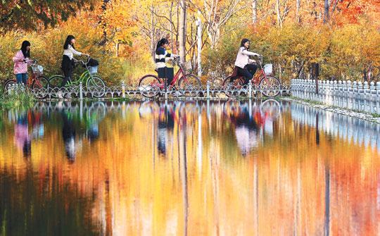 [포토 카페] 단풍으로 물든 가을 끝자락 기사의 사진