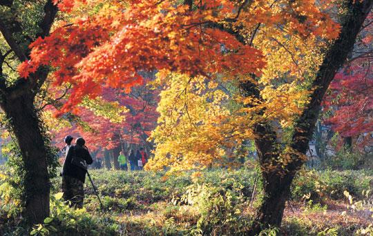 [그 숲길 다시 가보니-임항] 선운산 애기단풍은 시와 노래가 되고 기사의 사진