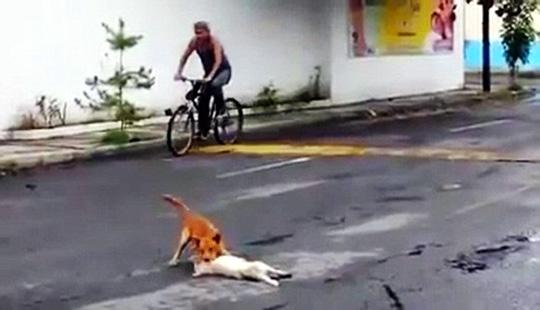 """""""일어나! 일어나라구!"""" 차에 치인 친구 목숨걸고 구하는 개… 페북지기 초이스 기사의 사진"""