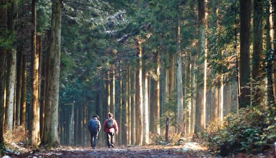 [그 숲길 다시 가보니-임항] 흰 눈 속에 반짝이는 초록빛 조엽수림 기사의 사진