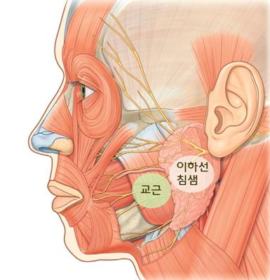 작고 갸름한 얼굴 만들기, '침샘비대증' 확인 기사의 사진