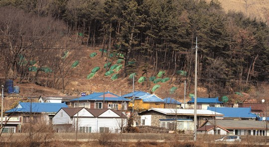 [단독] 전 국토에 '독가스' 살포… 재선충 잡으려다 사람 잡는다 기사의 사진