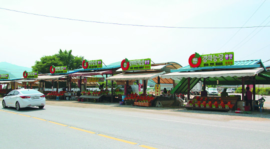 [살기 좋은 명품마을을 가다] (10) 경기 광주 퇴촌면 '토마토 마을' 기사의 사진