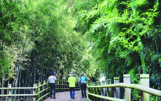 [그 숲길 다시 가보니-임항] 대숲이 키운 희귀동식물과 선비들 기사의 사진