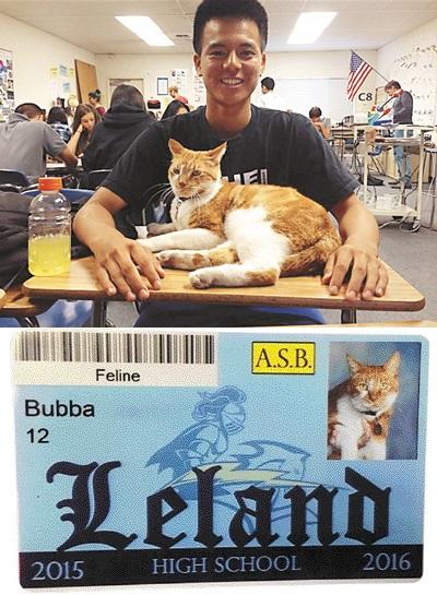 [친절한 쿡기자] '등교하는 고양이' 들어보셨나요?… 넉넉한 넉살로 美 학생 사랑 독차지 기사의 사진