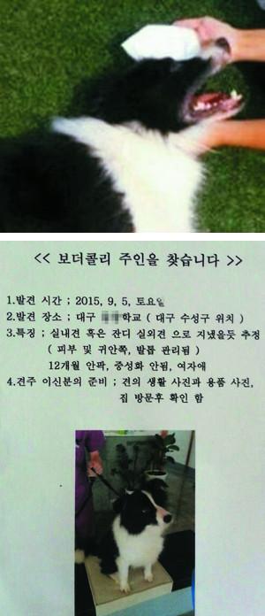 """[친절한 쿡기자] 운동장 동물학대에 """"처벌을"""" 서명운동… 네티즌, 주인 찾기·치료 온정도 잇따라 기사의 사진"""